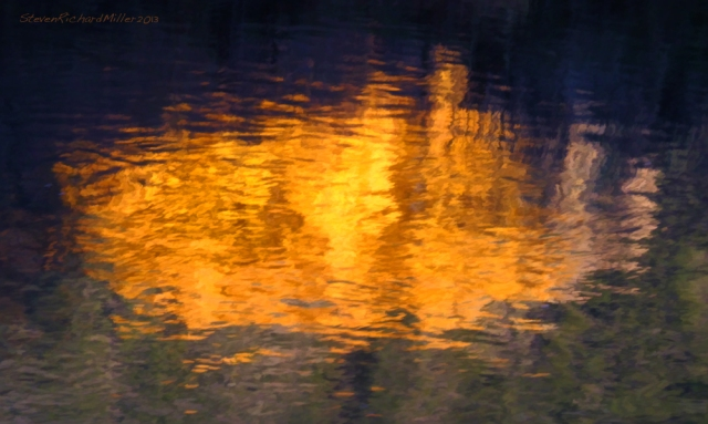 Reflection of cottonwood tree