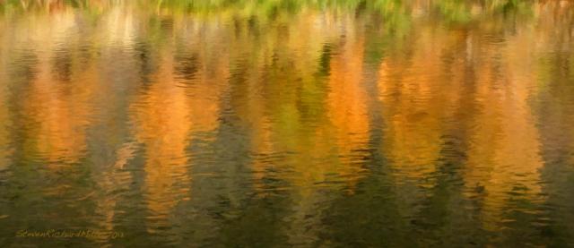 Reflection of tamarisk bushes