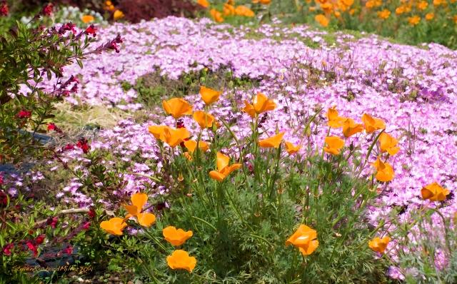 FlowerrMedley365