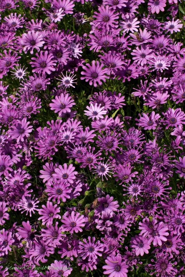PurpleFlowers94