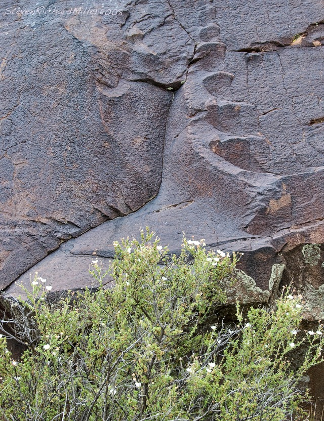 Basalt boulder, near Taos, NM