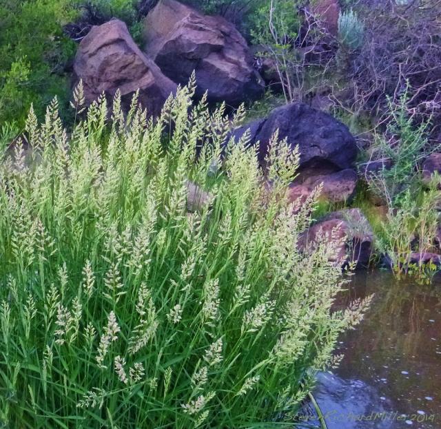 Grass and basalt boulders, along the racecourse4 run of the Rio Grande river, near Taos, NM