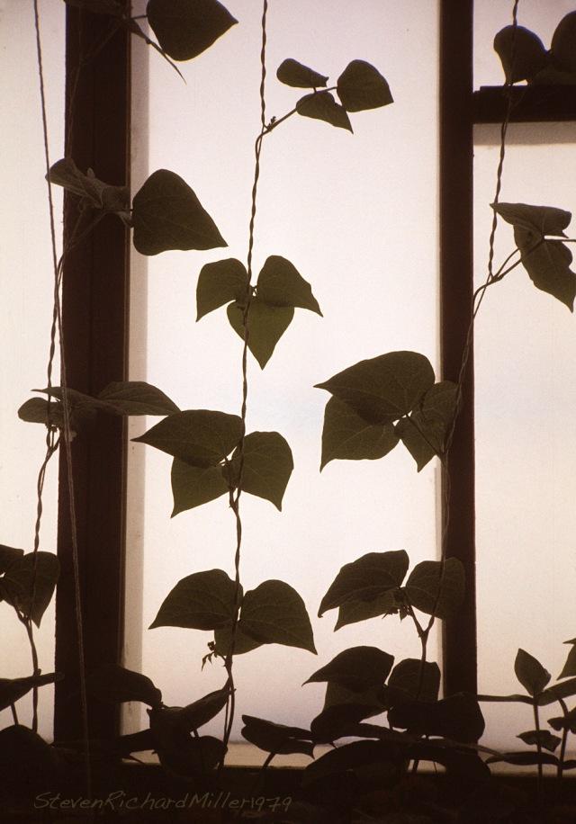 Greenhouse#8'78