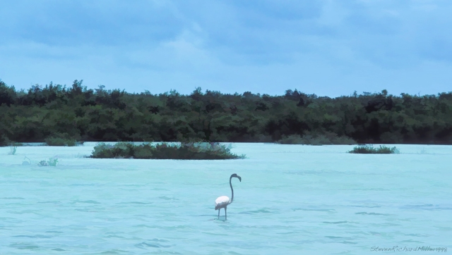 Flamingo, 1998