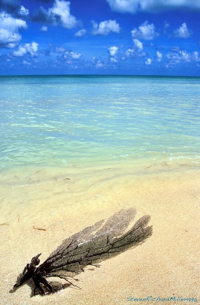 Sea fan on the beach