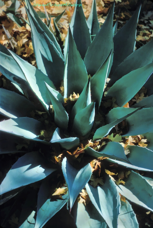 Agave and oak leaves
