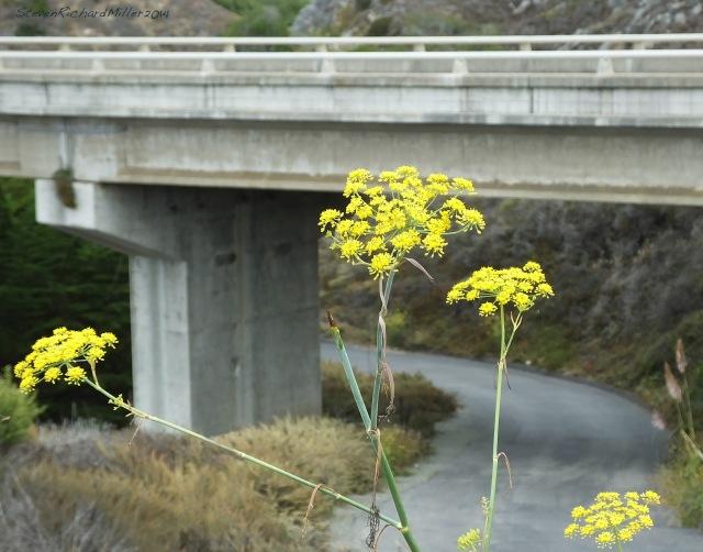 Big Sur Willow Creek