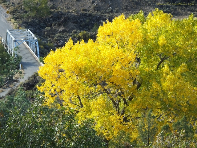 Cottonwood and Taos Junction bridge