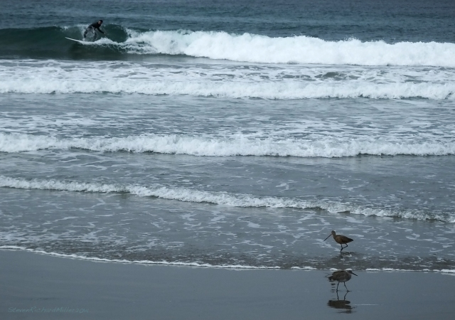 Surfer and shore birds