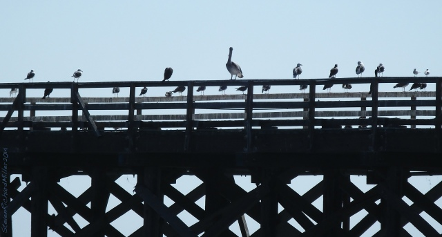 Gaviota, seabirds on the abandoned pier
