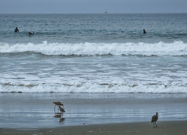 Shorebirds, surfers and saiboat, Morro Strand