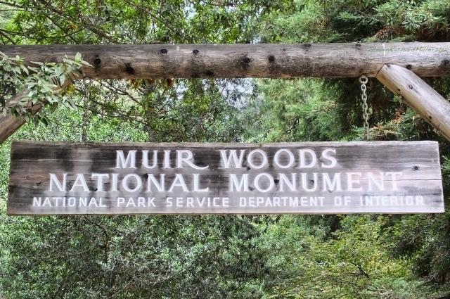 MuirWoods981
