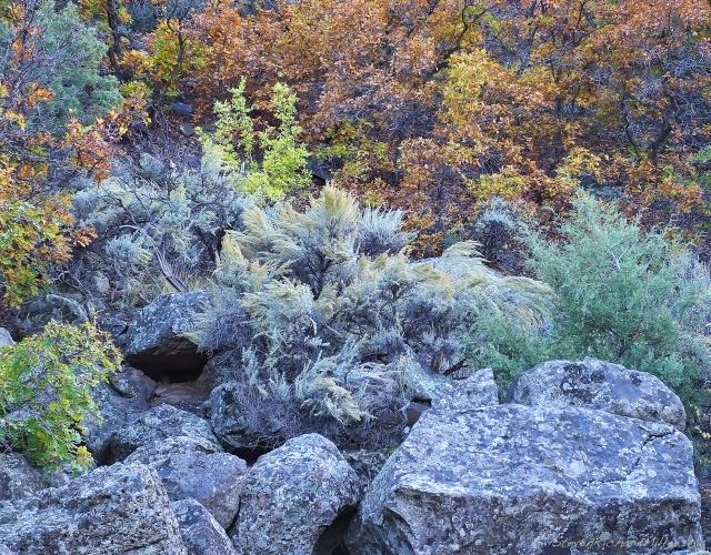 Oaks&Rocks