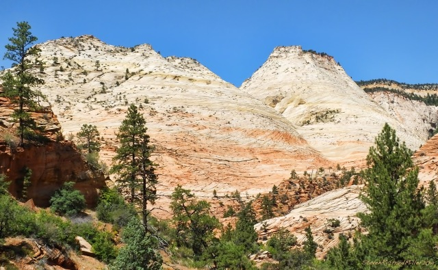 The high country along the eastern entrance to Zion NP