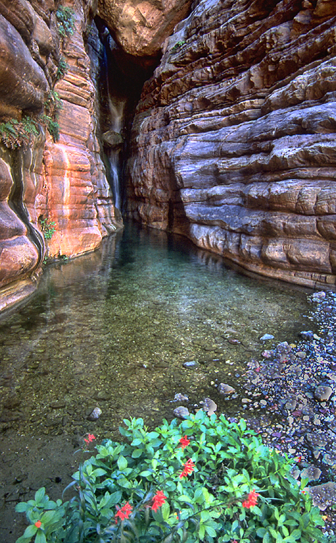 The Colorado River In The Grand Canyon Elves Chasm Mile
