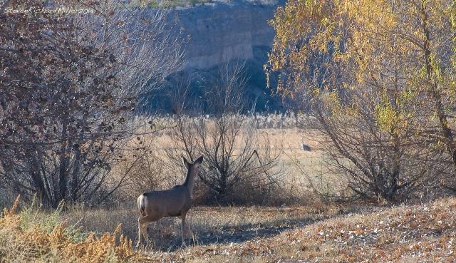 Deer and cranes