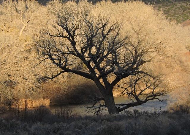 CottonwoodSilouhetteFeb252015_4377