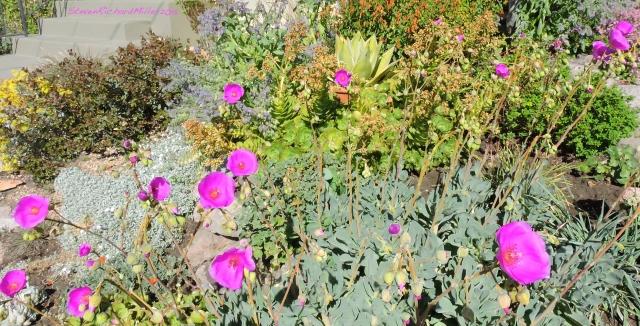 Albany flower garden