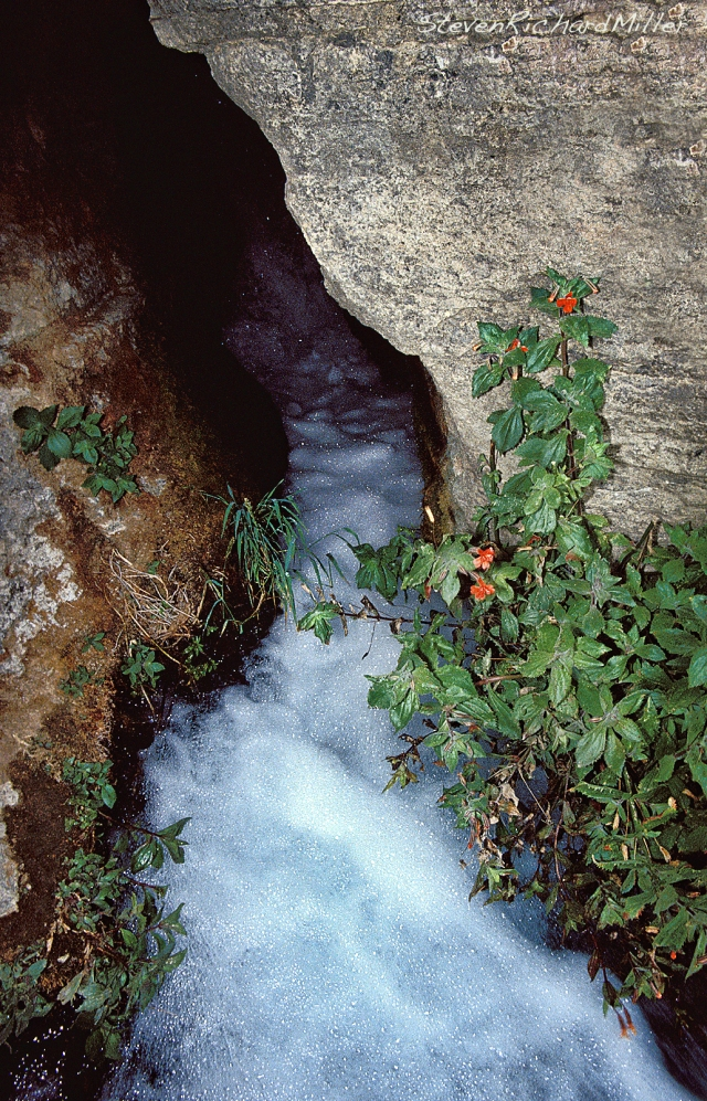 Thunder River cave mouth, with red monkeyflowers