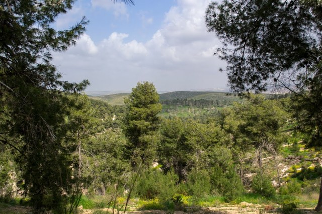 Kibbutz Lahav forest
