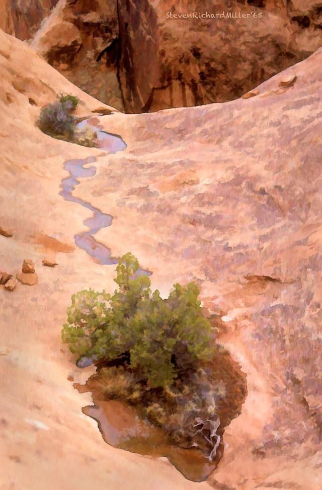 CanyonlandsPoolTree#7'65Bz