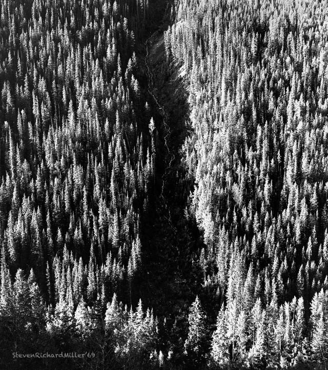 TreesElkCreek