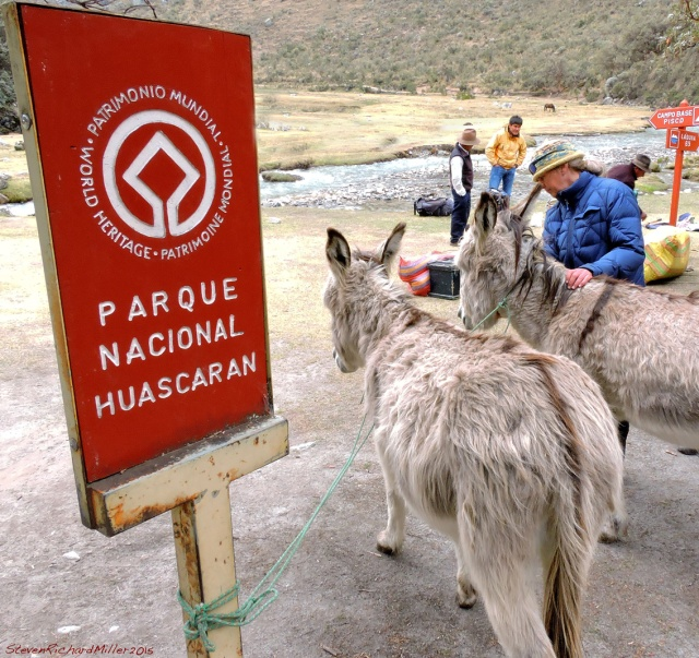 CJ gets acquainted with the burros. Our guide, Felipe, is seen behind