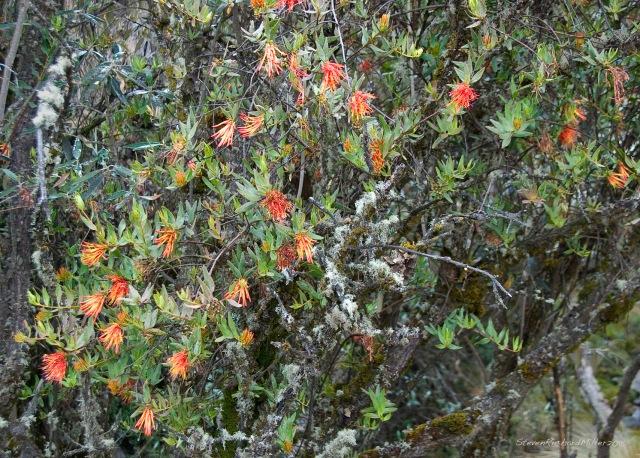An air plant or bromeliad