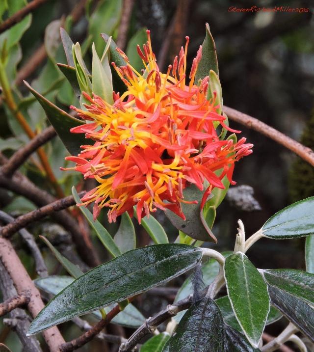 An air plant or bromeliad detail