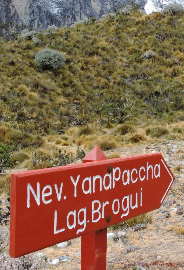 Yanapaccha sign