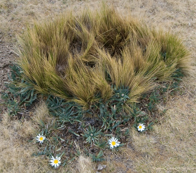 Flowers and tussock of grass
