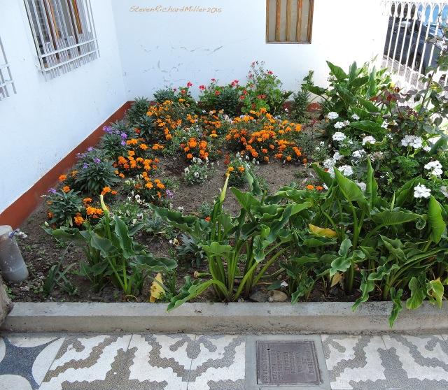 The garden at Mi Casa