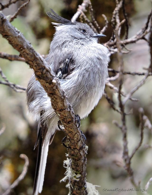 Bird(Unknown)_SCN2528