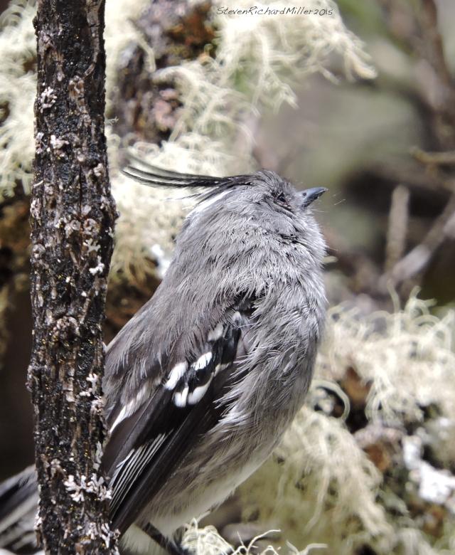 Bird(Unknown)_SCN2531