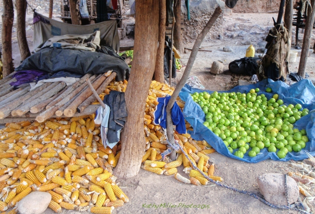 Corn and oranges, at a farm located on a side stream.