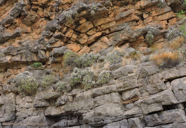 Folded limestone