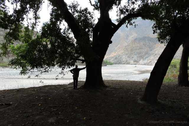 Karl, for scale, against a big mango. Downstream view to the river