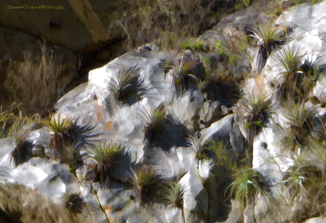 An artistic rendering of a nice arrangement of agave plants on a polished riverside boulder