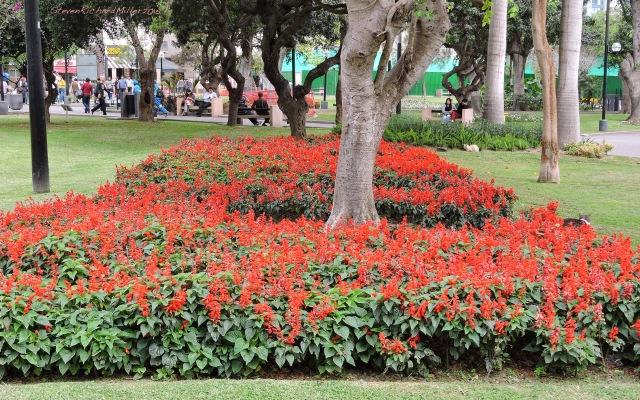 18. Park Nov052015_7736