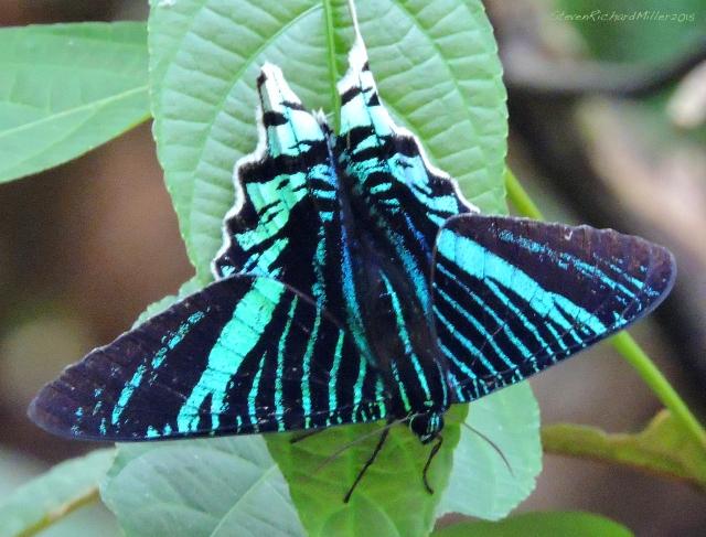 44. Butterfly Nov022015_8003