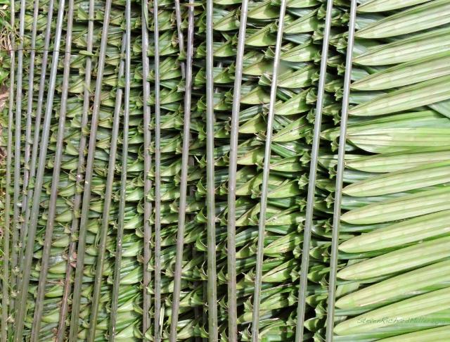 Palm thatch