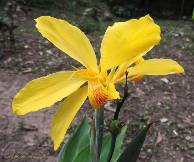 Flower Oct312015_8276