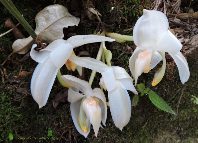 Orchid Oct312015_8209