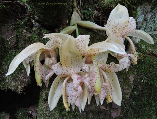 Orchid Oct312015_8210