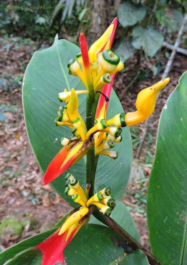 Orchid? Oct312015_8227