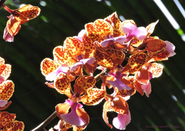 Orchid Oct312015_8233