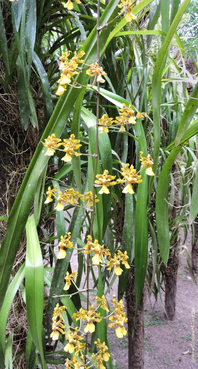 Orchid Oct312015_8292