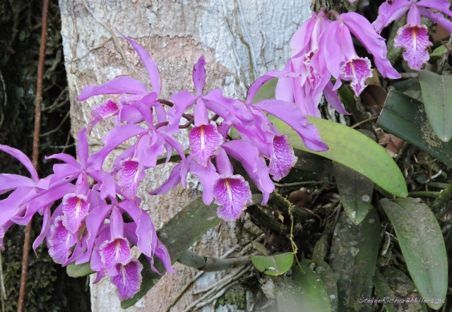 Orchid Oct312015_8295