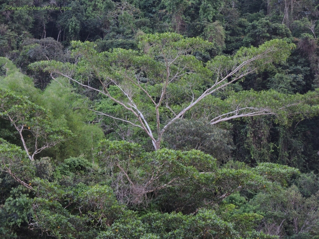 Rainforest Oct262015_8561