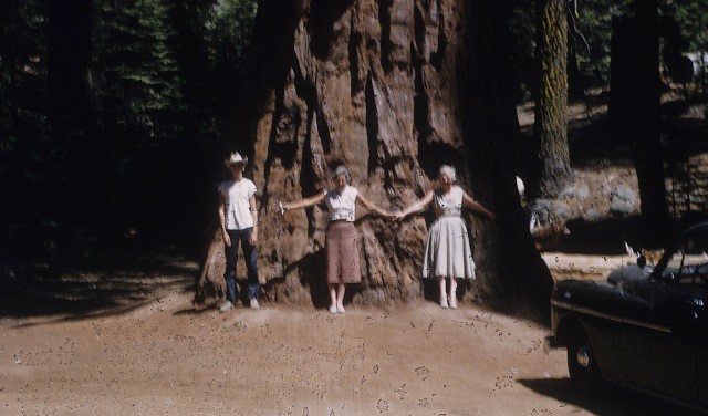 Sequoia Tree Yosemite Me Mom Etta